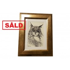 Norwegian Forest Cat - SOLD