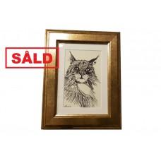 Norwegian Forest Cat - SOLD